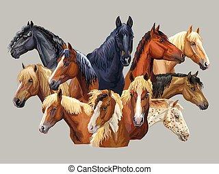 ensemble, 10, chevaux, espèces