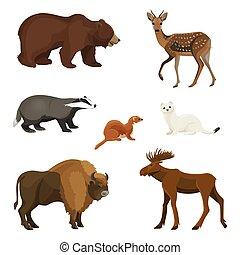 ensemble, animaux, pelucheux, herbivore, prédateurs, fourrure, forêt