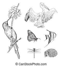 ensemble, animaux, vendange, collection, main, conception, appelé, dessiné, gravé, ou
