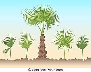 ensemble, arbre, leaves., ventilateur, paume, rond