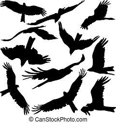 ensemble, arrière-plan., silhouettes, vecteur, proie, aigles, noir, blanc