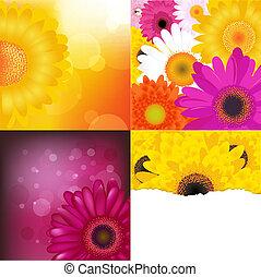 ensemble, arrière-plans, fleur