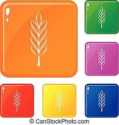ensemble, blé, icônes, couleur, vecteur, pointe