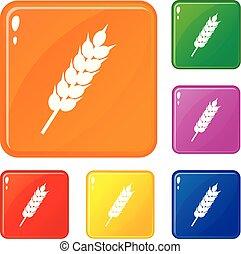 ensemble, blé, icônes, couleur, vecteur, séché, oreille