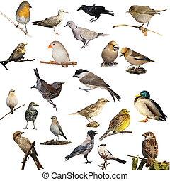 ensemble, blanc, isolé, oiseaux