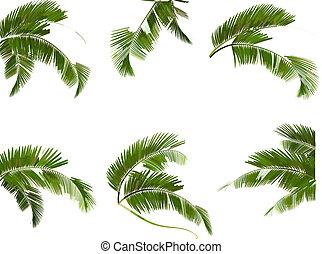 ensemble, branches, arbres., feuilles, vert, vector., paume