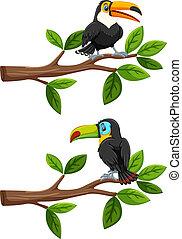 ensemble, branches, oiseaux