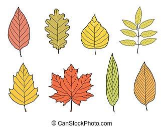 ensemble, coloré, feuilles, main, automne, dessiné