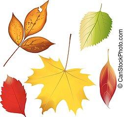 ensemble, coloré, leaves., illustration, automne, vecteur