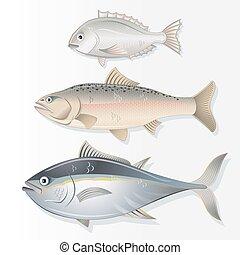 ensemble, comestible, saumon, dorado, fishes., thon