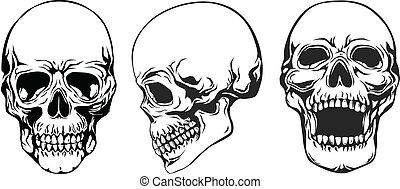ensemble, crâne