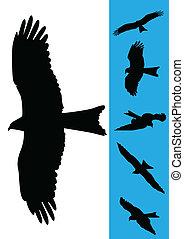 ensemble, de, 6, aigle, vecteur, illustrations