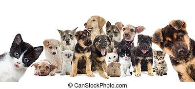 ensemble, de, animaux familiers