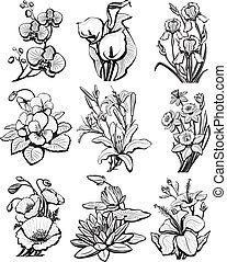 ensemble, de, croquis, de, fleurs