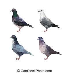 ensemble, de, différent, polygonal, pigeons