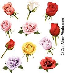 ensemble, de, différent, roses., vector.