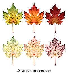 ensemble, de, feuilles
