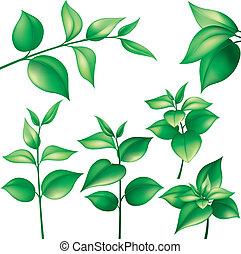 ensemble, de, feuilles vertes