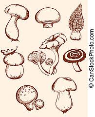 ensemble, de, vendange, forêt, champignons