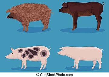 ensemble, dessin animé, cochon