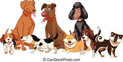 ensemble, divers, chiens