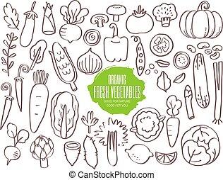 ensemble, doodles, légumes