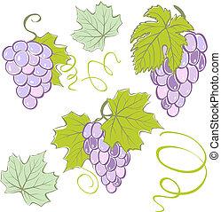 ensemble, elements., illustration, créatif, vecteur, raisins