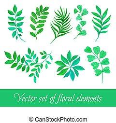ensemble, feuilles, collection, aquarelle, vecteur, floral, dessin