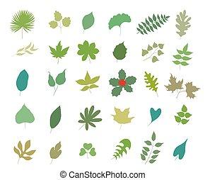 ensemble, feuilles, illustration, vecteur, divers, white., types