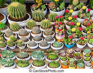 ensemble, fleurs, cactus
