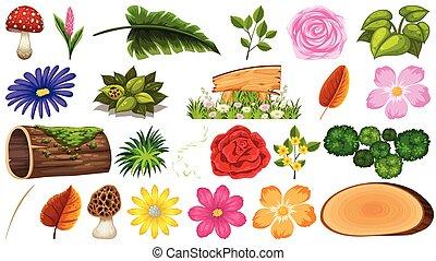 ensemble, fleurs, isolé, feuilles
