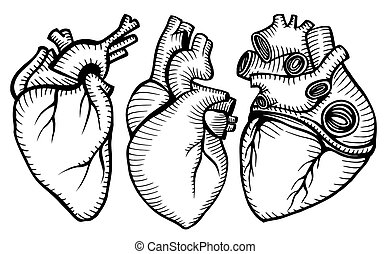 ensemble, hearts., humain