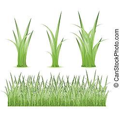 ensemble, herbe verte