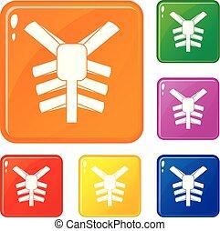 ensemble, icônes, couleur, vecteur, humain, thorax