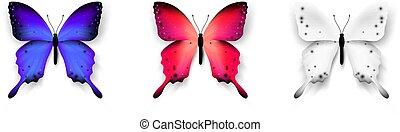 ensemble, illustration., coloré, butterflies., isolé, élément, vecteur, conception, fond, branché, blanc