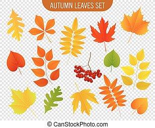 ensemble, illustration., coloré, leaves., automne, vecteur