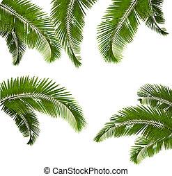 ensemble, illustration., feuilles, arrière-plan., vecteur, paume, blanc