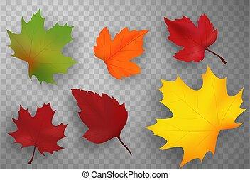 ensemble, illustration., isolated., feuilles, automne, vecteur