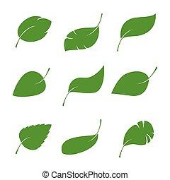 ensemble, illustration., leaves., vecteur, vert, isalated
