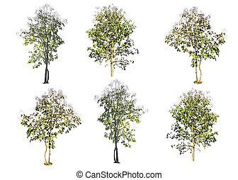 ensemble, isolé, arbres, teak, bois, fond, blanc