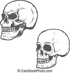 ensemble, isolé, arrière-plan., vecteur, blanc, crânes