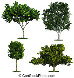 ensemble, isolé, contre, quatre, arbres, pur, blanc