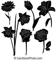 ensemble, isolé, silhouettes, arrière-plan noir, fleurs blanches