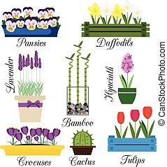 ensemble, jardin, intérieur, pots, vecteur, fleurs