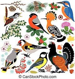 ensemble, oiseaux