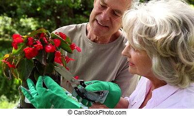 ensemble, retiré, jardinage, couple