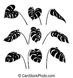 ensemble, silhouette, exotique, feuilles, vector., monstera