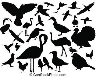 ensemble, silhouette, oiseaux