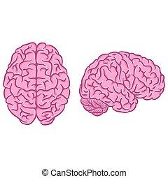 ensemble, silhouettes, rose, cerveau
