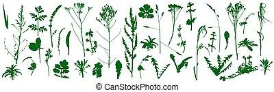 ensemble, silhouettes., usines, vecteur, sauvage, illustration., mauvaises herbes
